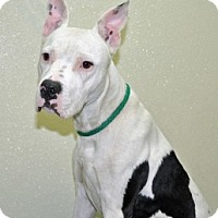 Adopt A Pet :: Junior - Port Washington, NY
