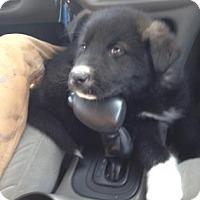 Adopt A Pet :: Little Foot - Saskatoon, SK
