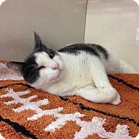 Adopt A Pet :: Winky - Burbank, CA
