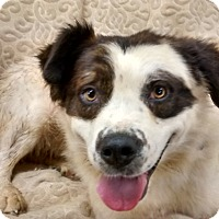 Adopt A Pet :: Snuffy - richmond, VA