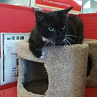 Adopt A Pet :: Mouse - San Ramon, CA