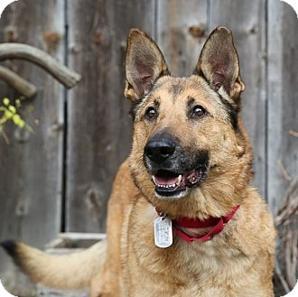 German Shepherd Dog Mix Dog for adoption in Columbia, Illinois - Rudy