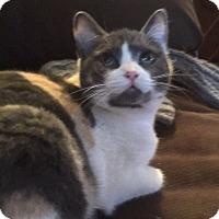 Adopt A Pet :: Mandee - Kelso/Longview, WA