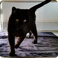 Adopt A Pet :: Hobble - Greeley, CO