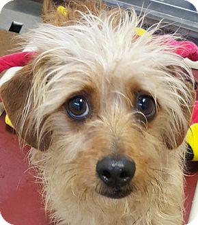 Dog Rescue Boulder Co
