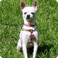 Adopt A Pet :: Lucky - Loomis, CA