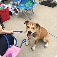 Adopt A Pet :: Moses - Hohenwald, TN