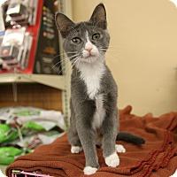 Adopt A Pet :: Stella - Rochester, MN