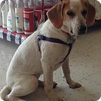 Adopt A Pet :: Emma Lily - Hillside, IL