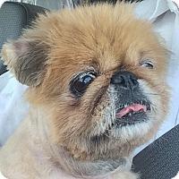 Adopt A Pet :: Saki - Irmo, SC