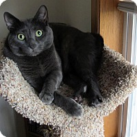 Adopt A Pet :: Dr. Tiny Cat - Grinnell, IA