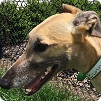 Adopt A Pet :: Duron Sun - Longwood, FL
