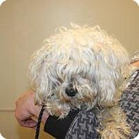 Adopt A Pet :: 318343 LF - Wildomar, CA