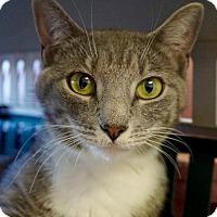 Adopt A Pet :: Coraline - Wauconda, IL