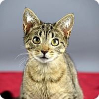 Adopt A Pet :: Laverne - Columbia, IL