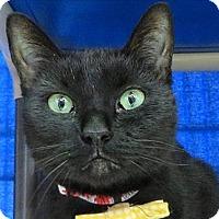 Adopt A Pet :: Echo - Sherwood, OR