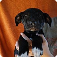 Adopt A Pet :: Tara - Oviedo, FL