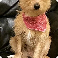 Adopt A Pet :: GEORGE - Fort Pierce, FL
