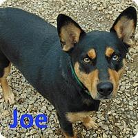 Adopt A Pet :: Joe - Mountain View, AR