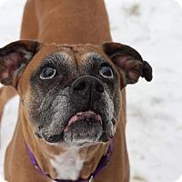 Adopt A Pet :: Mel - Bristol, CT