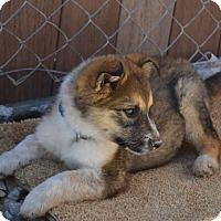 Adopt A Pet :: BANDIT - Taking Applications - Hurricane, UT