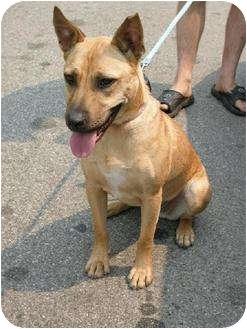 Rosa | Adopted Dog | 1777043 | Rancho Palos Verdes, CA ...