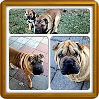 Adopt A Pet :: Mr. Miyagi - Houston, TX