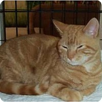 Adopt A Pet :: Butch Cassidy - Catasauqua, PA