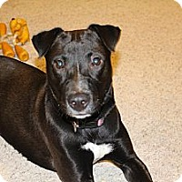 Adopt A Pet :: Sammy - Grand Rapids, MI