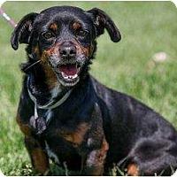Adopt A Pet :: Rufus - Poway, CA