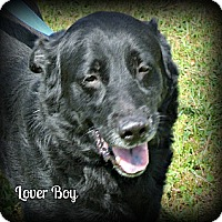 Adopt A Pet :: Lover Boy - Vancleave, MS