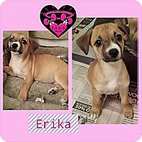 Adopt A Pet :: Erika - Fowler, CA