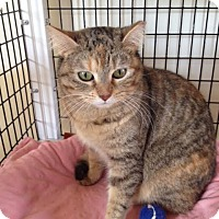 Adopt A Pet :: Barbara Ann - Chicago, IL