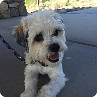 Adopt A Pet :: Coco - Novato, CA