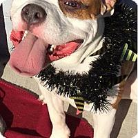 Adopt A Pet :: Logan - Rockaway, NJ