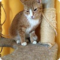 Adopt A Pet :: Sweet - Tucson, AZ