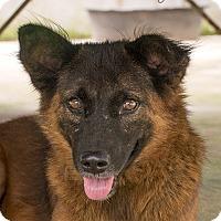Adopt A Pet :: Brazen - Long Beach, NY