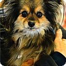 Adopt A Pet :: Shebah