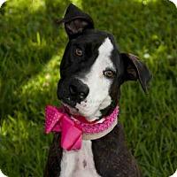 Adopt A Pet :: OPHELIA - West Palm Beach, FL