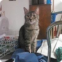 Adopt A Pet :: Gail - Trevose, PA