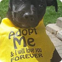Adopt A Pet :: Reba - Joliet, IL