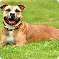 Adopt A Pet :: MATILDA - Los Angeles, CA