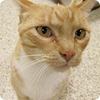 Adopt A Pet :: Harvey - Georgetown, TX
