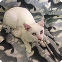 Adopt A Pet :: Blanco - Forest Hills, NY