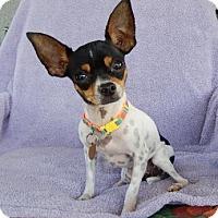 Adopt A Pet :: Pickles - Studio City, CA