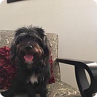 Adopt A Pet :: Levi - Lodi, CA