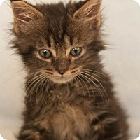 Adopt A Pet :: Iris 08-4052 - Fremont, CA