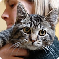 Adopt A Pet :: Nero - Greenfield, IN