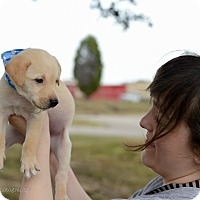 Adopt A Pet :: Toby - Muldrow, OK