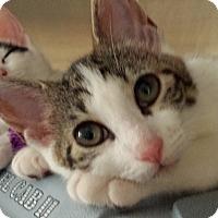 Adopt A Pet :: Sunny - Wayne, NJ